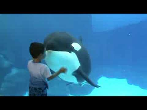 Orca Family Playing with Crowd