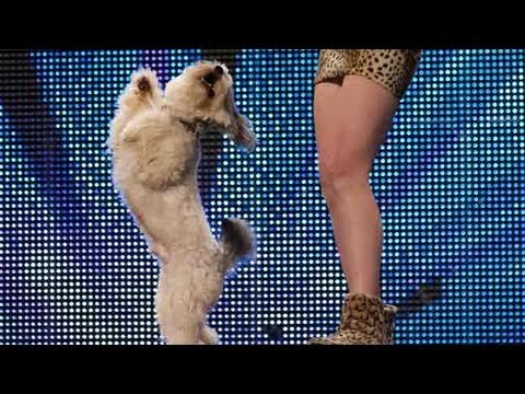 Watch Ashleigh and top dog Pudsey's super cute Britain's Got Talent audition. Dancing together to BC-52 tune The Flintstones, can the adorable pair melt the ...