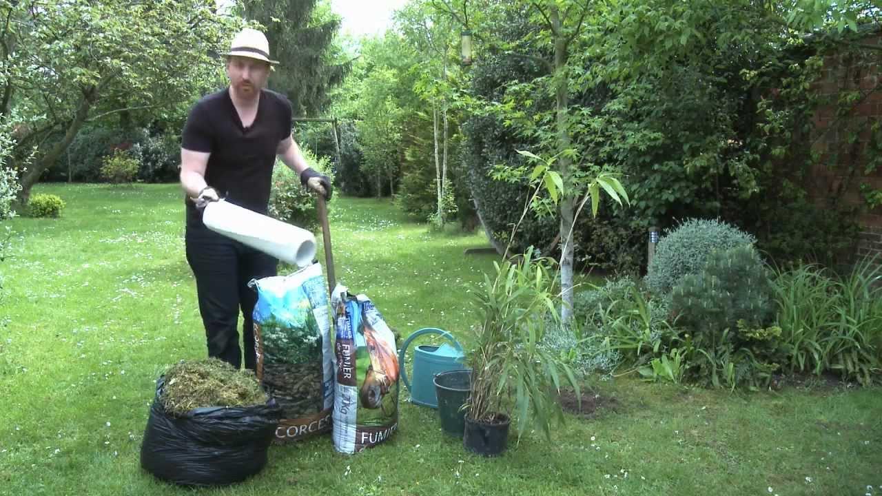 Planter un bambou youtube - Comment planter des bambous ...