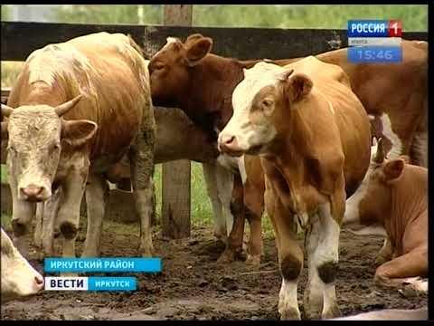 Выпуск «Вести-Иркутск» 21.08.2017 (15:38)