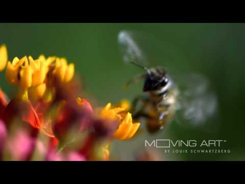 The Importance of Pollination
