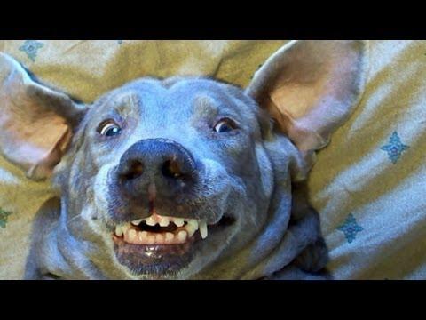 Funny Dog Faces Memes Dog More Funny Dog Memes