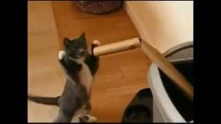 Funny cats boxing