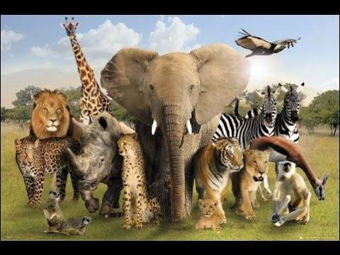 أكبر 5 محميات طبيعية على وجه الأرض