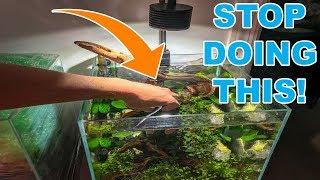 BIGGEST TIP FOR NEW AQUARIUM PLANTS!