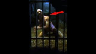 Top 10 Mysterious Creatures Caught On Camera   Unbelievable Creatures Sightings On Videos