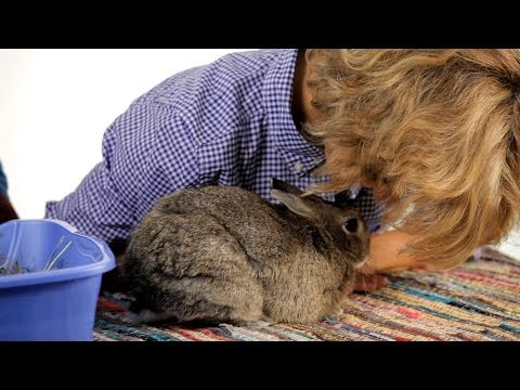 How to Get Rid of Your Rabbit's Odor | Pet Rabbits