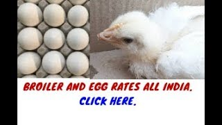 23-1-2019 Open Broiler and NECC Egg Price | Subscribe For Daily Rates |
