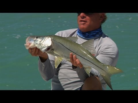 SNOOK fishing in the backcountry of Key Largo, FL