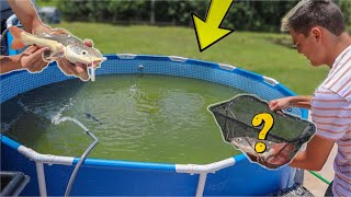 $2000 PLATINUM FISH Transfer to My POND!!!