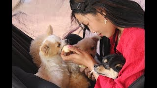 Wow Amazing Beautiful Girl Playing With Dog   Smart & Funny Dog Part15