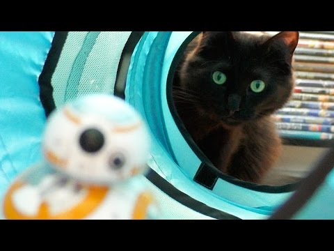 BB-8目線で見る巨大な猫や変わった人が住む新しい惑星♪