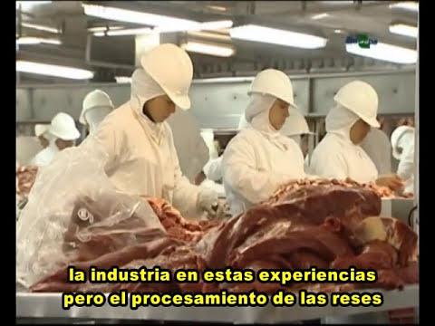 calidad de la carne - parte 2