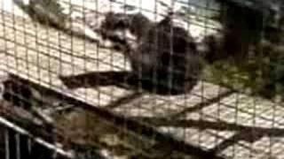 Parc animalier de Souppes s/Loing