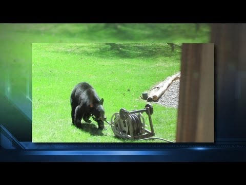 Wife rescues husband from black bear attack