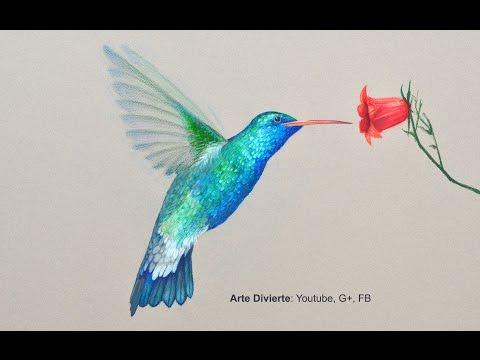 Cómo dibujar un colibrí con lápices de colores