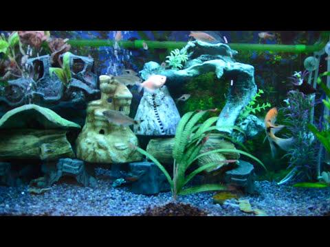 Mi acuario peces de aguas tropicales 150 litros HD (VII) jab