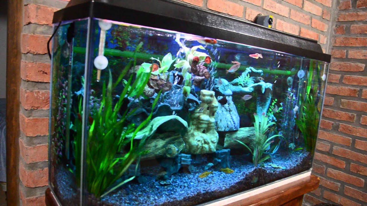 Mi acuario peces de aguas tropicales 150 litros hd vii for Peces agua dulce tropicales para acuario