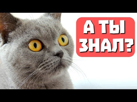 20 интересных фактов о кошках. С веселым котом #Джемом