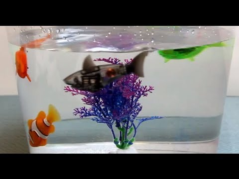 Robotic Fish Battle Challenge - Great Grey Shark versus RoboFish & AquaBots