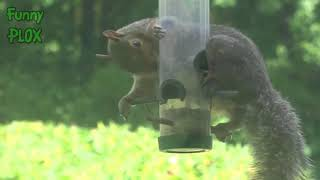 FUNNIEST RACCOONS and SQUIRRELS in the WORLD! - Funny RACCOON & SQUIRREL compilation