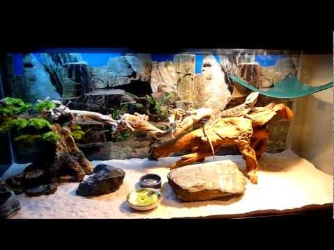 PetStore Employees Bearded Dragon setup