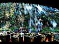 Metamorphosis- Ayahuasca Documentary