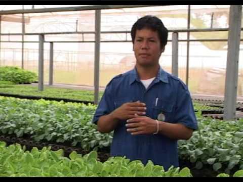 การวางแผนการปลูกพืชผักและการเพาะกล้า