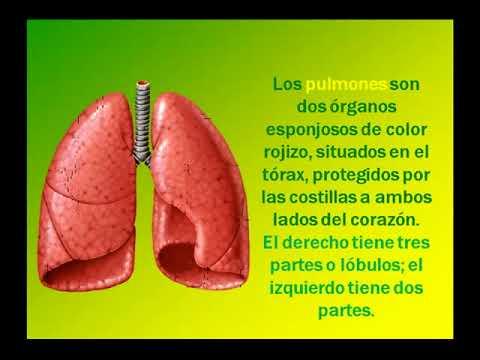 Sistema o aparato respiratorio primera parte yopendragon