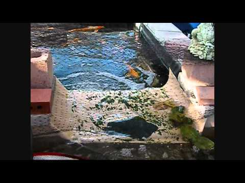 700 gallon koi pond filter system how to save money and for Do it yourself fish pond
