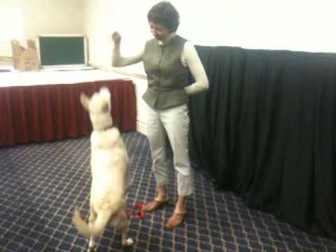 Pia Silvani training CARA dog Sasha