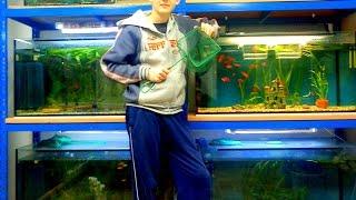 Film Akvarijních Rybiček