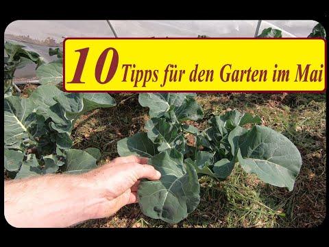 Garten Im Mai 10 Tipps