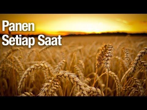Panen Setiap Saat - Ustadz Abdullah Zaen, MA