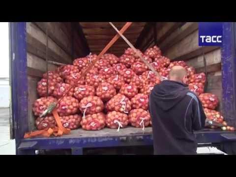 Героин спрятан в лук. Фуру с 25 кг наркотиков задержали на овощебазе в Екатеринбурге