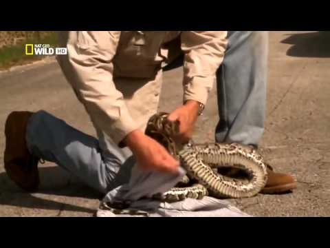 Самая большая змея в мире документальный фильм(кино)