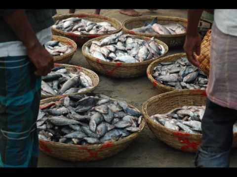 Dhaka Mawa Fish Market