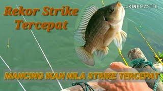 #REKOR STRIKE,,, TERCEPAT MANCING IKAN NILA