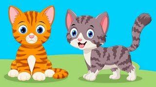 Kedi Kardeş Nerdesin? - En Güzel Çocuk Şarkıları