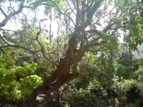 Beautiful  Old  Drama  Song.- Malayalam video