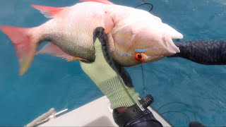 Hunting for food in Quarantine | Mutton Snapper Catch