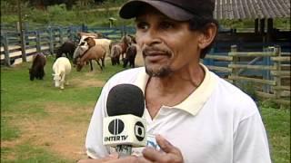 Haras D'lucas interior de Minas reportagem da Intertv dos vales