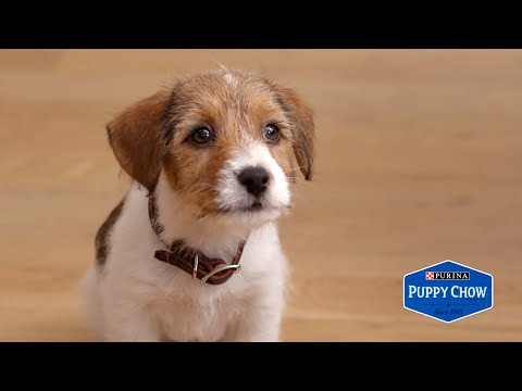 When You Have An Anxious Puppy // Presented By BuzzFeed & Puppy Chow