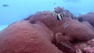 Phi Phi Islands with Sea Gypsy Divers, Krabi
