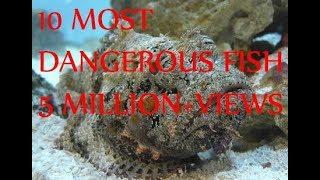 10 Most Dangerous Fish