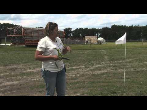 FS Field School 2014 - Field Scouting