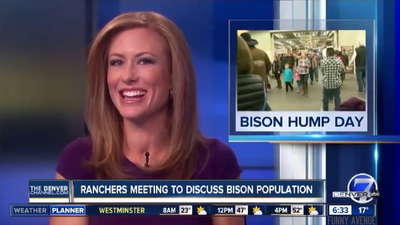 Bison Hump Day Makes Everyone Happy