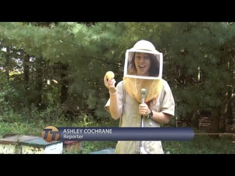 Bee Poisoning - Short Feature