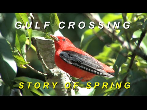 Gulf Crossing: Story of Spring