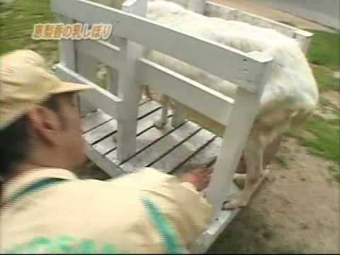 戸田恵梨香が乳搾りに挑戦